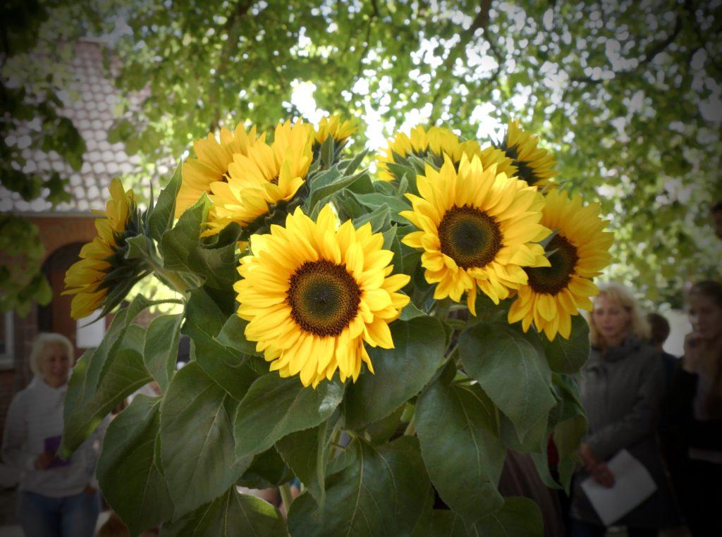 Sommerfest, Sonnenblume